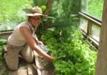 Mech lettuce_7553
