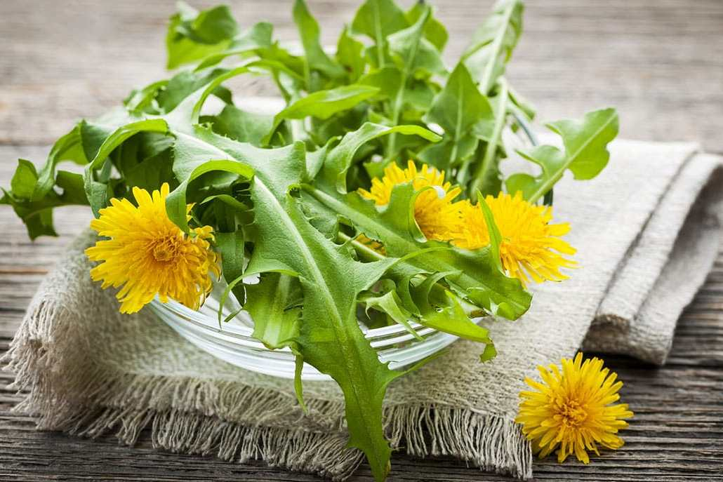 Rosemary Gladstar: Wild Greens & Spring Remedies