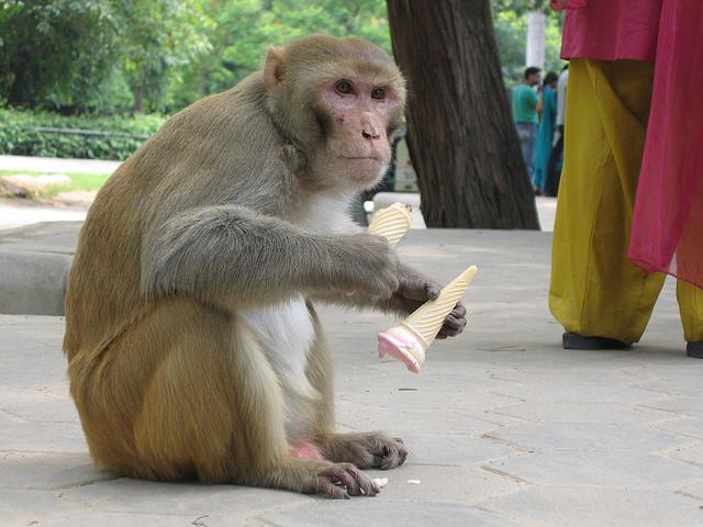 Jugaad Monkey