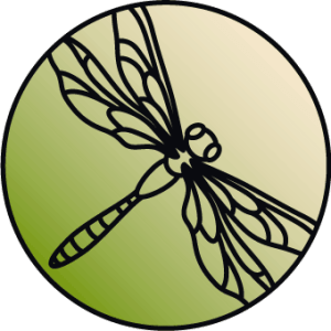 Sketch of a dragonfly on a green gradient background
