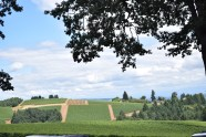 View at Erath Winery