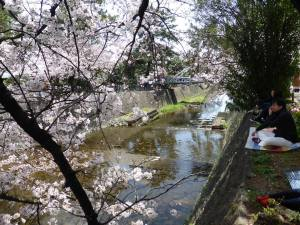 Sakura 2016 in Nishinomiya 8