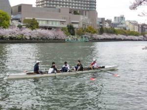 Sakura 2016 Osaka -Cherry blossom 1