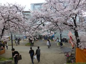 Sakura 2016 Osaka -Cherry blossom 11