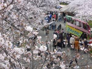 Sakura 2016 Osaka -Cherry blossom 14