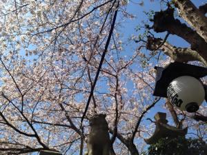 Sakura 2016 Kobe 4