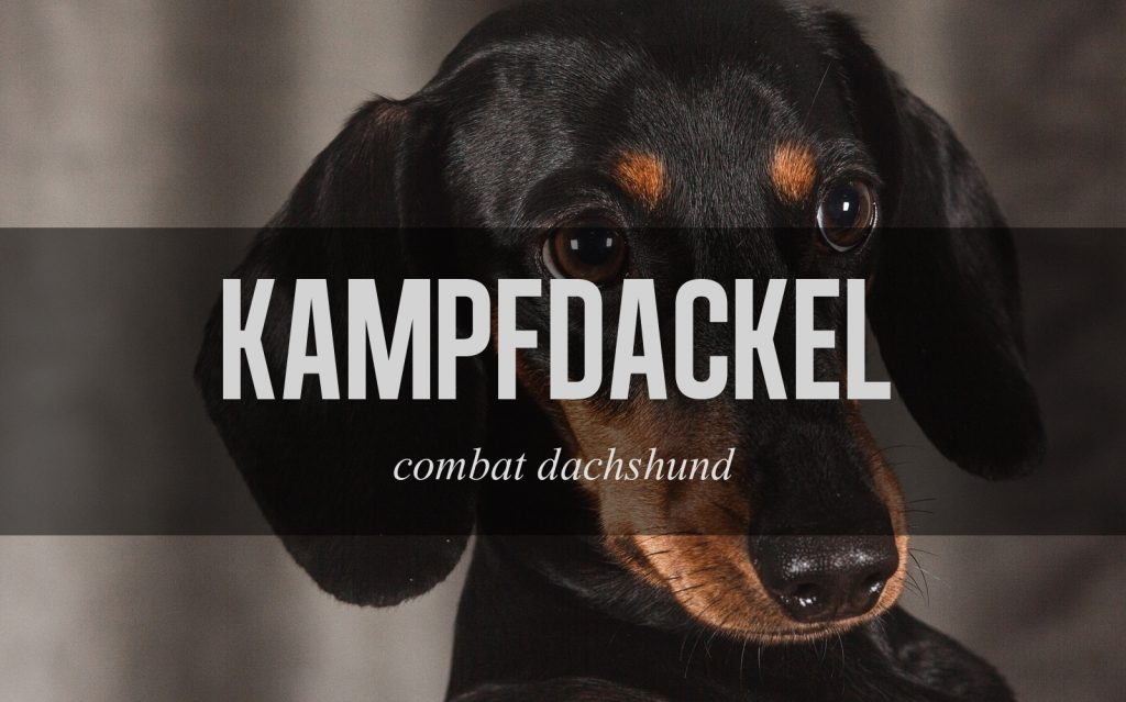 german-insult-8
