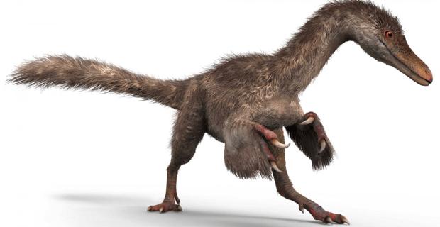 feathered-dinosaur