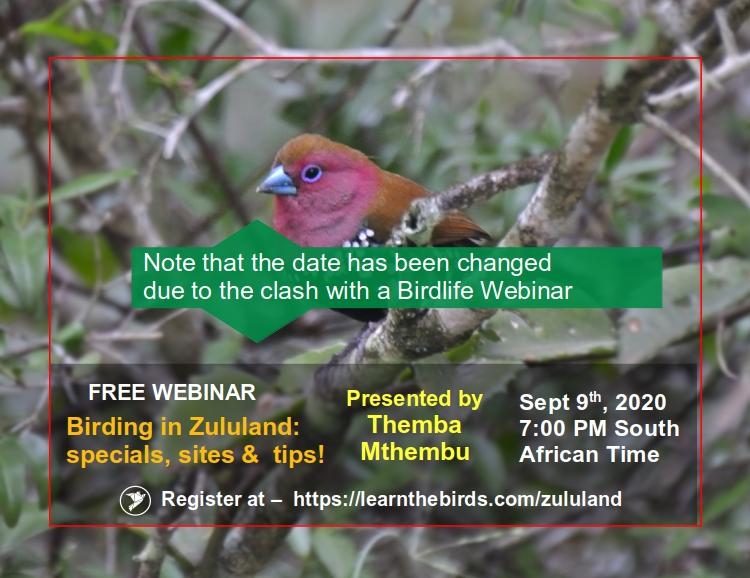 Zululand Birding