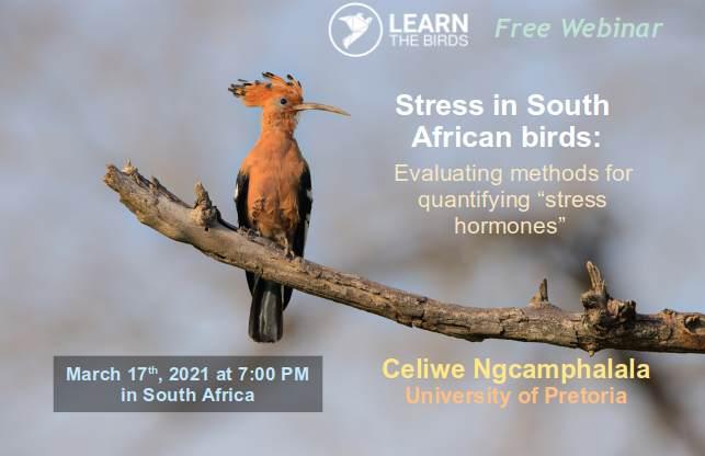 Stress in birds thumbnail