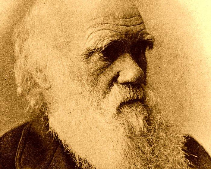 Creation versus Darwin  Evolution