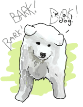 A samoyed dog barking