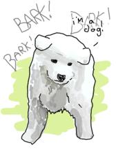 A samoyed dog barking