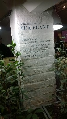 Tea-tasting at Whittard