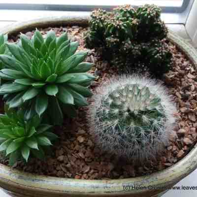 One Cactus, Two Cacti, Three Cacti, Four……..