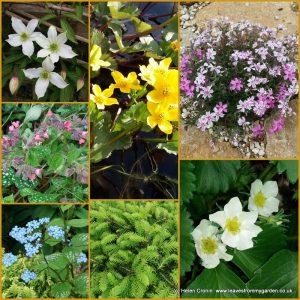Dovewood Garden Photo Challenge Week 4