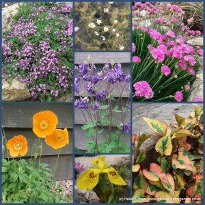 Dovewood Garden Photo Challenge Week 6