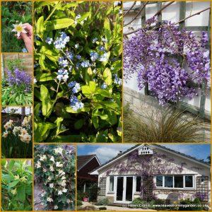 Collage of Garden Photos week 2