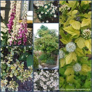 Dovewood Garden Photo Challenge Week 7