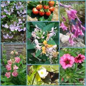 Garden Photo Challenge week 10