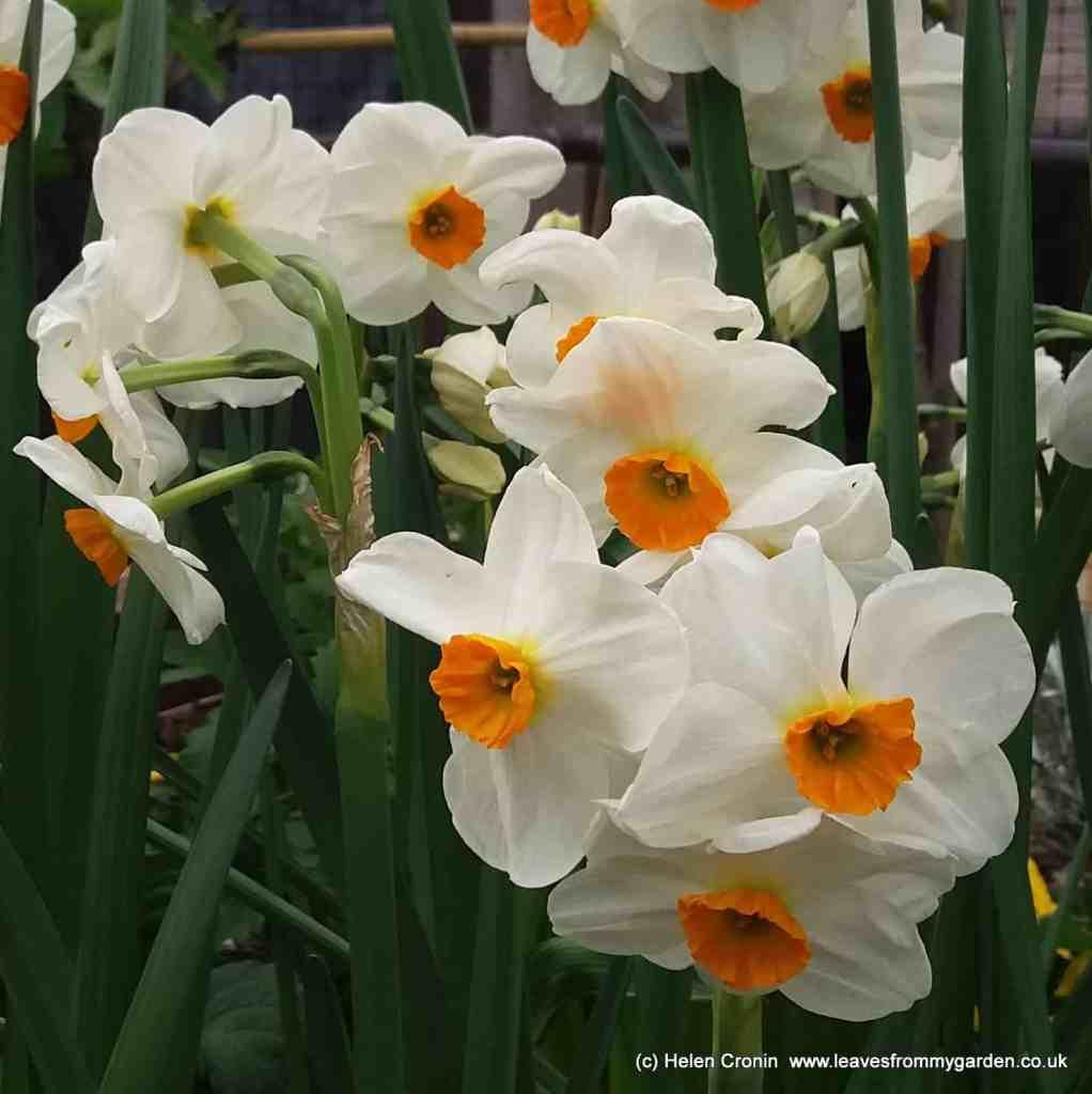Spring Bulbs at Dovewood