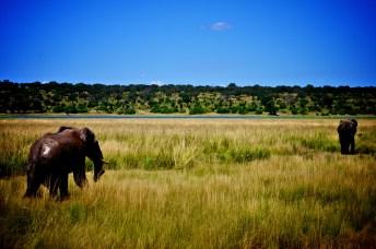Chobe National Park, Botswana (2014)