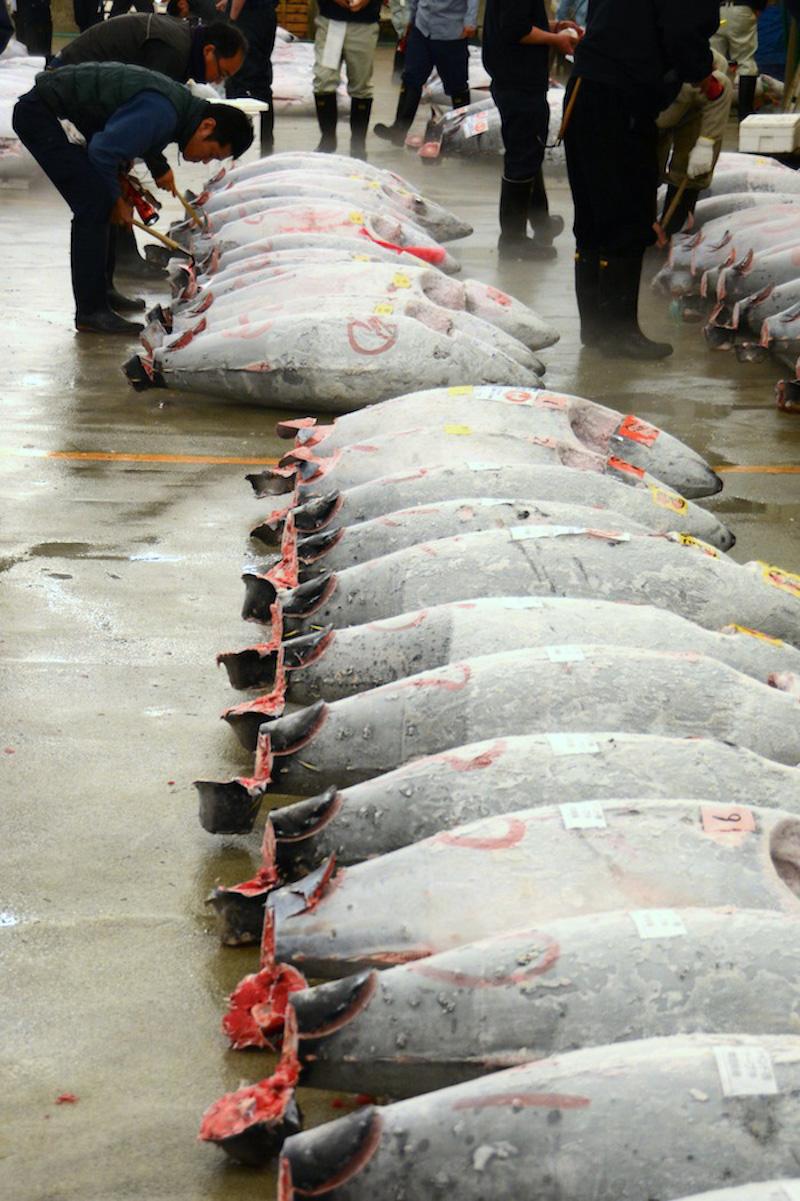 Tuna Auction in Tokyo, Japan