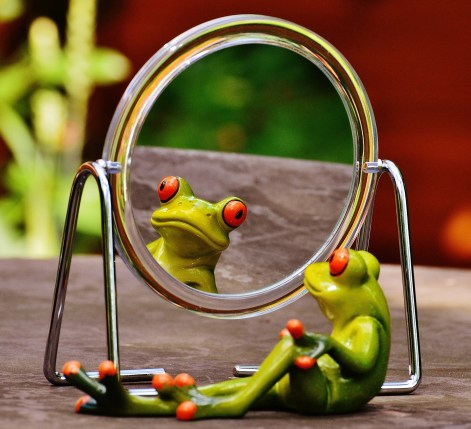 frog-1498907_1920.jpg