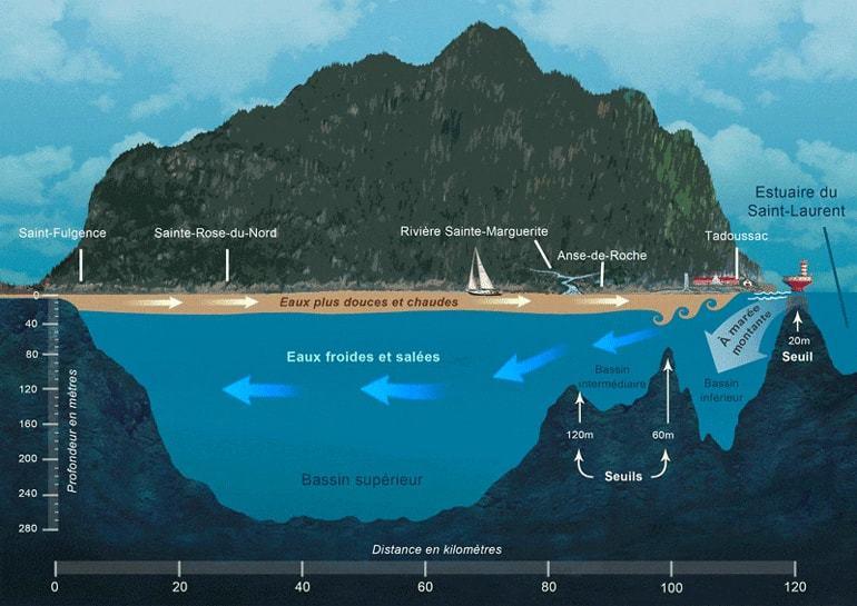 Coupe de l'écosystème marin du Fjord du Saguenay