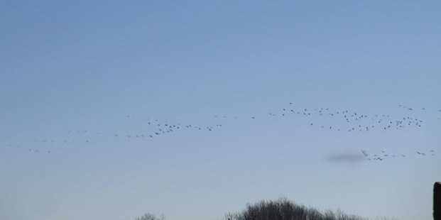 migration des grues printemps 2014