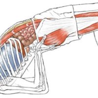 Yoga Anatomie Bücher
