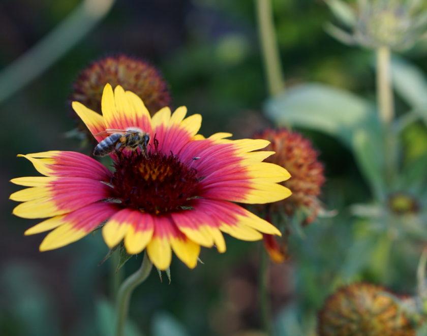 Besetzte Blume