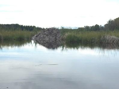 Beaverlodge Wetlands, Fotos: ©Denise Ott