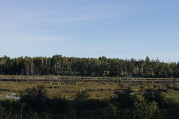 Gänse auf den Wetlands, Fotos: ©Denise Ott