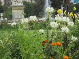 Blumen am Louvre