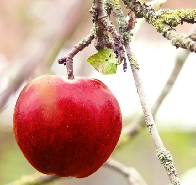 Santas-Apfel