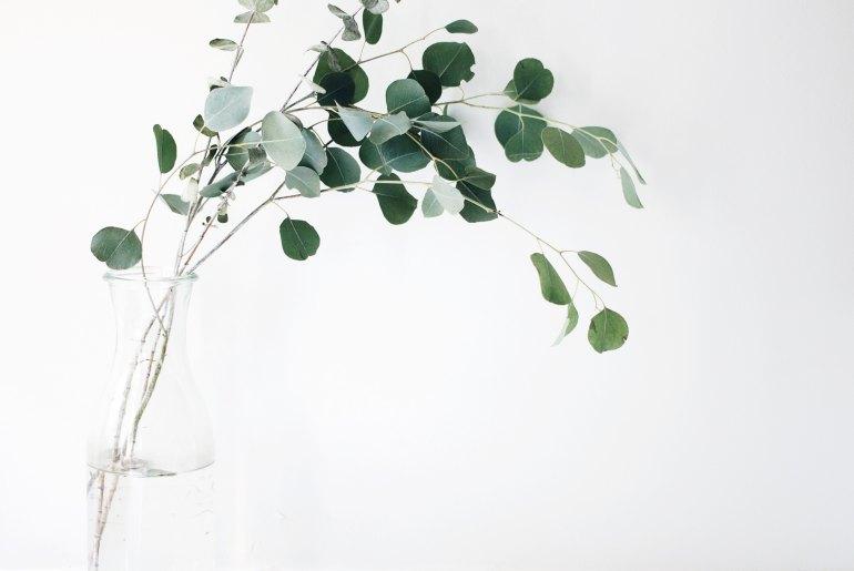 Minimalismus Eukalyptus