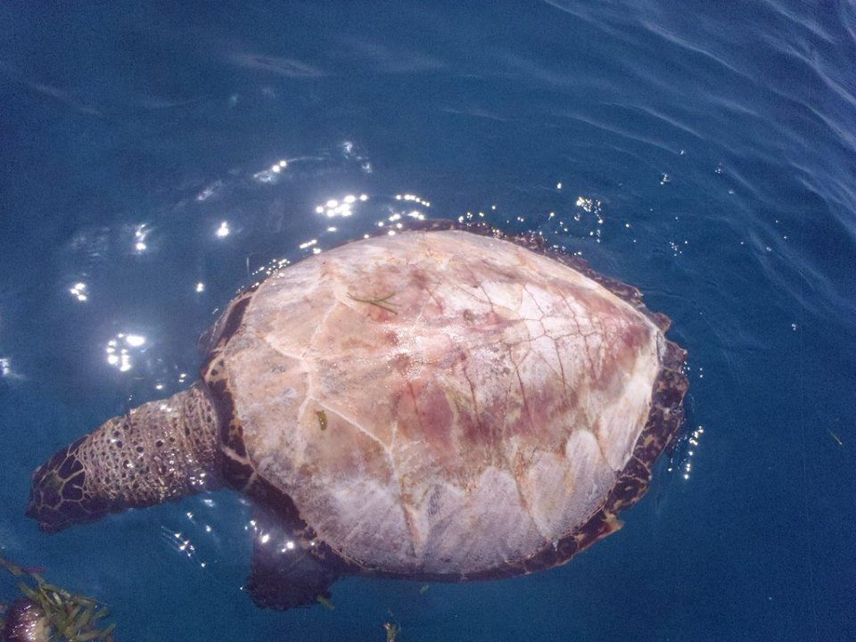 Turtles are peeled alive