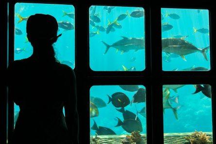 [:fr]Nautilus aviation et le Sunlover Reef Cruise[:en]Nautilus aviation and the Sunlover Reef Cruise[:]