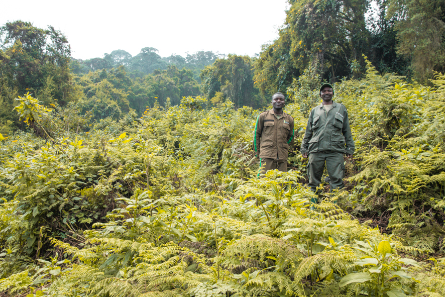 Trackers in the Volcanoes National Park in Musanze