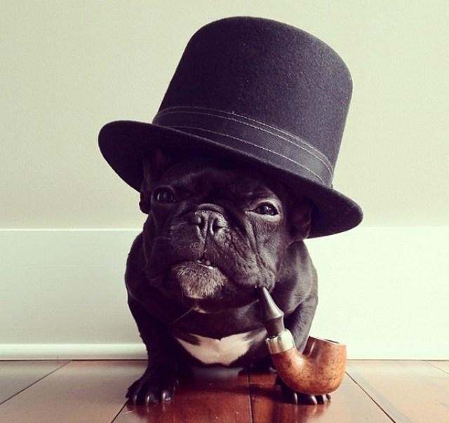 instagram-frenchie-omg-cute-things-082812-13