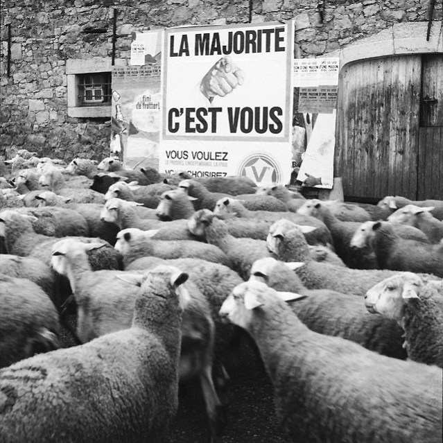 mouton tonte