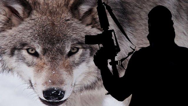 lone-wolf1