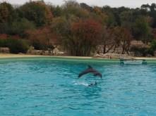 dauphin spectacle planète sauvage
