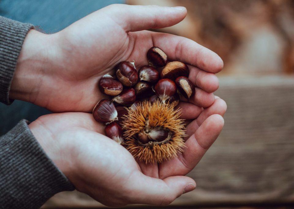 chataigne fruit d'automne