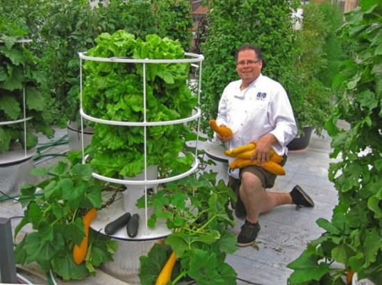 Rooftop le jardin hydroponique de new york le blog des for Jardin hydroponique