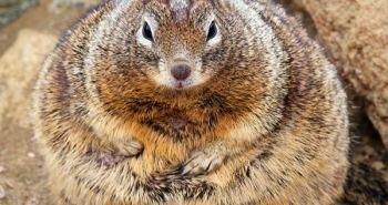 fat_squirrel