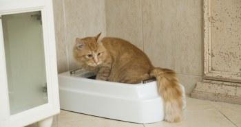 Catolet – La première litière automatique au monde pour les chats et les petits chiens