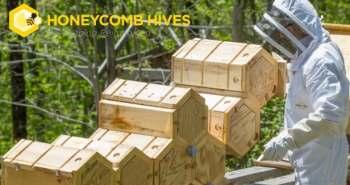 Honeycomb Hives – Des hexa-ruches modulaires meilleures pour les abeilles