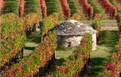 Vinhedos da Bourgogne